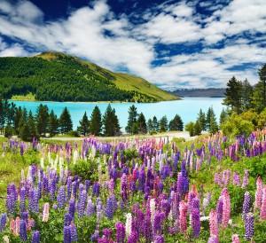 photodune 1228894 lake tekapo new zealand m1 300x274 photodune 1228894 lake tekapo new zealand m