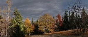 automne col de la biche 300x127 Stitched Panorama